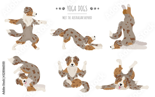 Yoga dogs poses and exercises. Australian shepherd clipart Canvas Print