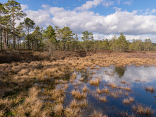 View Of A Peat Bog Lake On A Sunny Day