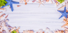 Summer Background With Sea Shell