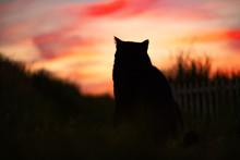夕焼けを見つめる猫