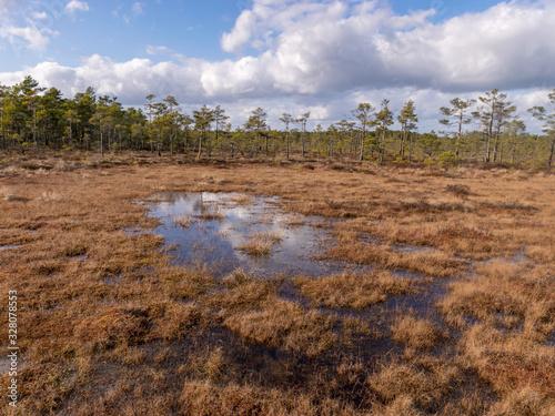 Carta da parati bog landscape with foreground of old grass