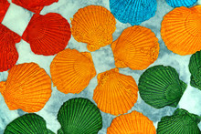 Colorful Scallop On The Table