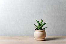 Aloe Flower In A Ceramic Pot O...