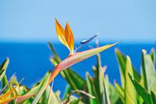 Vivid Flower Of Bird Of Paradi...