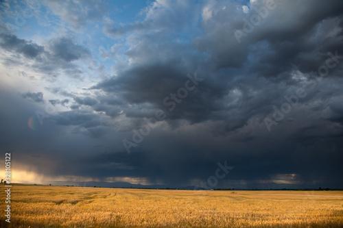 Valokuvatapetti Wheat Field with Coming Storm