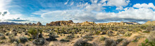 Landscape With Joshua Trees In...