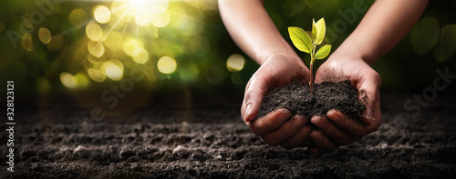 Plant in Hands. Ecology concept. Nature Background Wallpaper Mural