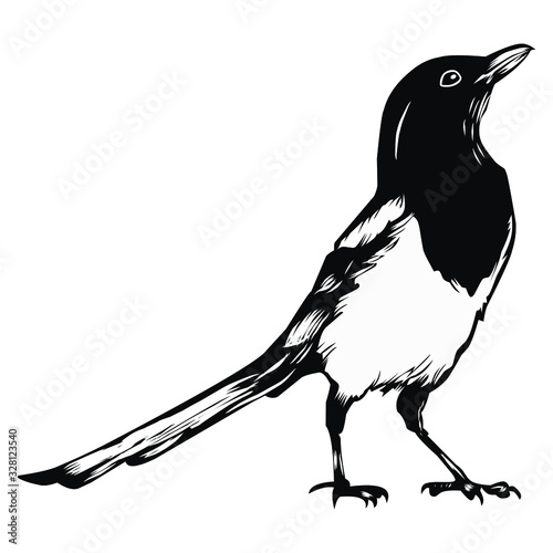 Obraz na plátně Illustration of magpie stone, chirping mania, suitable for screen printing and l