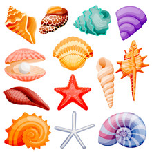 Seashells Collection. Vector F...