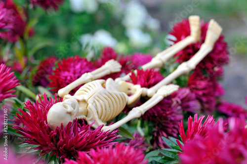 The skeleton lies on the flowers. Maroon asters. Wallpaper Mural