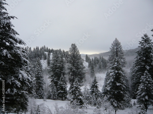 Fotografie, Obraz Morning mist lifting from forest floor