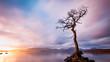 Szkocja, drzewo