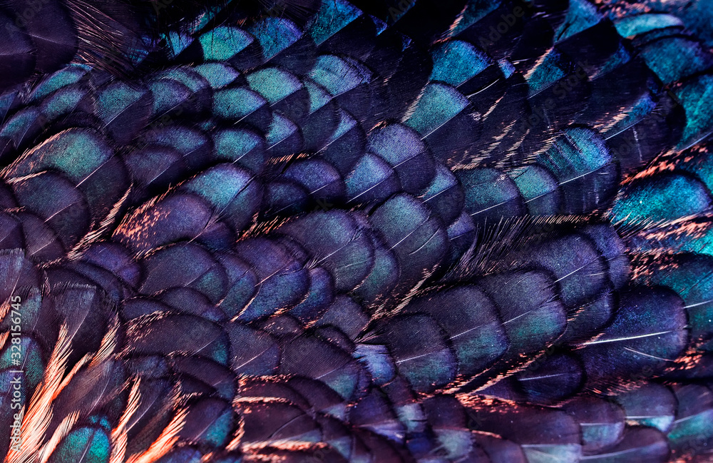 background from textures of bright iridescent feathers of a beautiful fairy bird of lilac and purple color