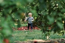 Little Boy Holding An Apple.