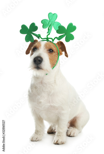 fototapeta na drzwi i meble Jack Russell terrier with clover leaves headband on white background. St. Patrick's Day