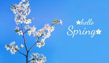 Hello Spring. Beautiful Bloomi...