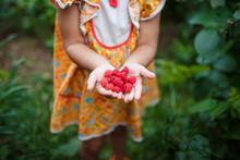 Raspberries In Children 's Hands