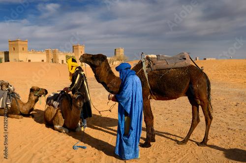Berber men tending Dromedary camels after a morning ride in Erg Chebbi desert at Wallpaper Mural