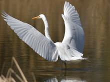水辺の鳥、左向きで美...