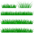 Green grass illustration isolated white background. Vector Illustration .