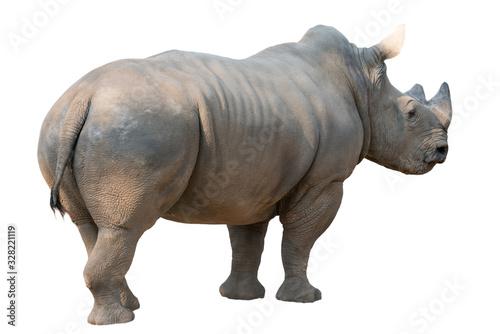 white rhinoceros isolated Tapéta, Fotótapéta