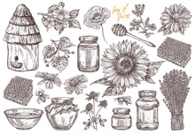 Hand Drawn Vector Honey Set With Plants And Flowers. Collection Of Sketch Illustrations For Beekeeping, Apiculture And Mead Company And Business. Hives, Spoon, Honeycomb, Jars And Pot, Wildflowers