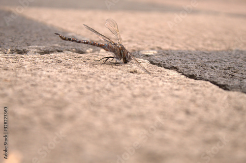 Photo Anisoptera.