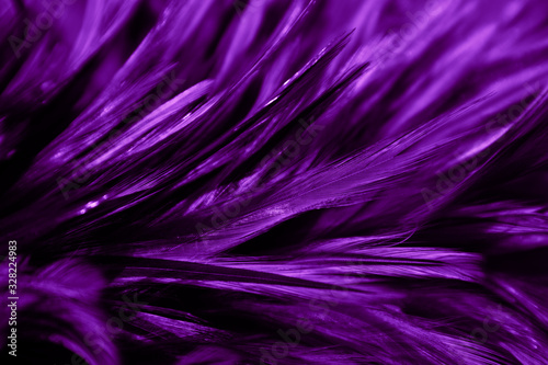 Beautiful abstract colorful black and purple blue feathers on black background and soft blue feather texture on dark pattern and blue background, colorful feather, purple banners - 328224983