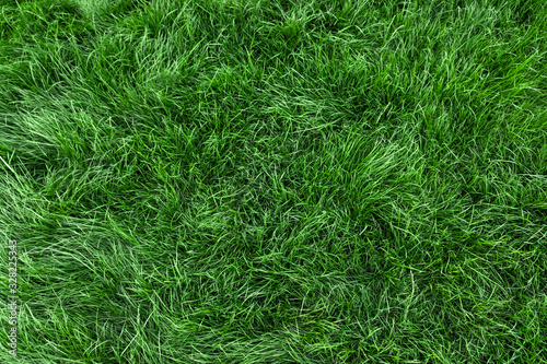 Obraz Natural green grass background, fresh lawn top view - fototapety do salonu
