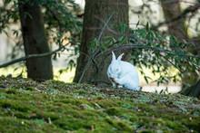 One Cute White Rabbit Sitting ...