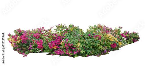 Fotografía Flower vine bush tree isolated t on white background.