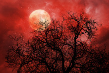 Halloween Background With Red Moon And Dead Tree