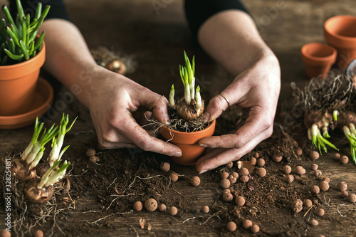 Woman gardeners transplanting plant in ceramic pots on the old wooden table фототапет