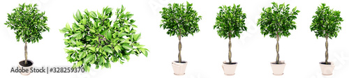 Obraz Set or collection of beautiful green interior plants isolated on white background. Concept or conceptual 3d illustration for nature and ecology, beauty and gardening, spring or summer - fototapety do salonu