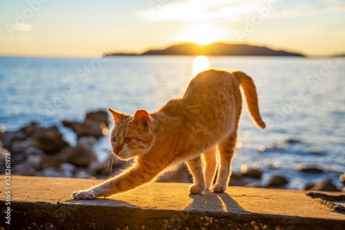 Canvastavla Ginger cute cat stretching a rocky beach and a beautiful sunset over the ocean i