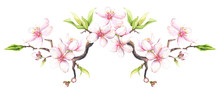 Watercolor Painted White Cherry Blossoms On A Branch. Isolated Floral Arrangement Illustration.