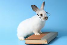 White Rabbit Wearing Glasses W...