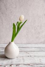 White Tulip In A Vase