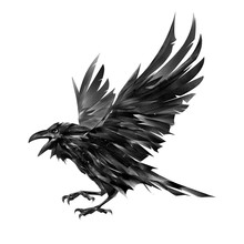 Painted Flying Raven Bird On A...