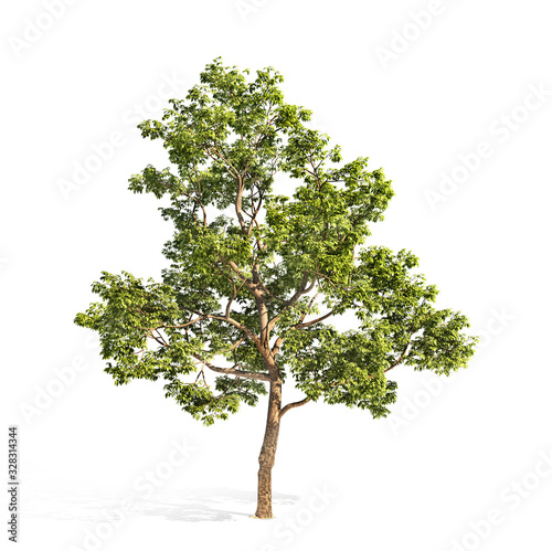 Fotomural Realistic tree on a white background. 3d illustration