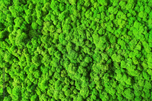 green moss for interior decoration - 328322521