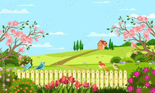 Fototapeta Horizontal spring landscape with fence, tulips, roses, blooming trees and bushes, hills, birds and house. Rural illustration with summer garden in cartoon flat style for banners, backgrounds, advertis obraz