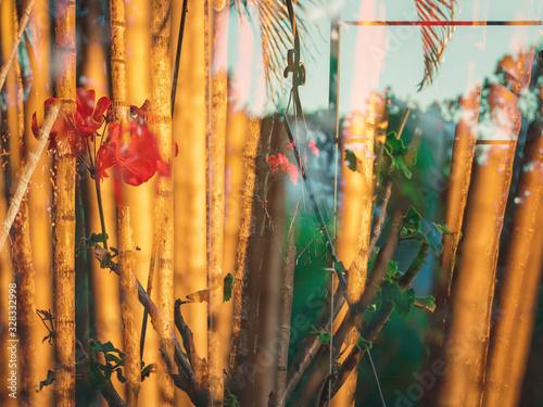 Flores e bambus