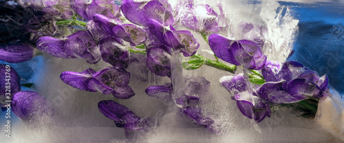 Photo Background of branchaconite  flower    in ice   cube with air bubbles