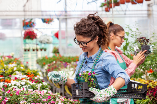 Two woman work in nursery plant with differnt types of flowers