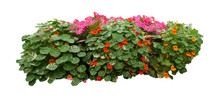 Flower Bush Isolated On White Background