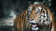 Close-Up tiger.