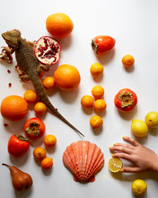 Still Life With Fruit, Shell A...