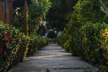 Camino En Medio De Arbustos