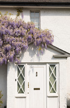 Vertical Image. Traditional English Front Door Of Old House In White Color With Blooming Purple Wisteria Plant On The Wall. Elegant Style. Spring In England.
